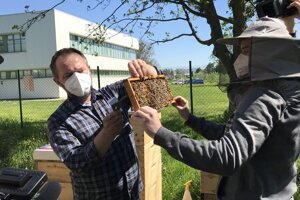 Študentov Prešovskej univerzity vyučujú v novom predmete včelárstvo.