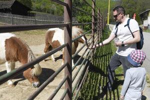 Shetlandské poníky,
