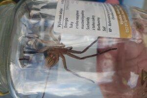 O tropickom pavúkovi, ktorého našli vobchodnom dome, napíšu  vedecký článok.