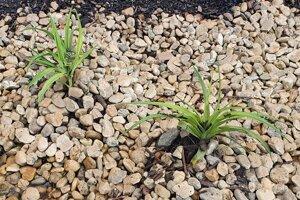 Rastliny sa dokážu prispôsobiť väčšej vlahe, ale aj suchu.