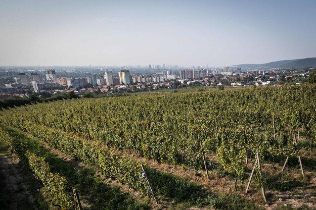 Slovensko má len 8500 hektárov kultivovaných viníc.