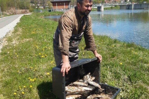 Uhynuté ryby v rieke Poprad.