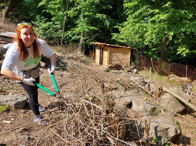Dobrovoľníci pri Prešove upravujú aj ohradu pre kozy.