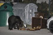 Často medvedicu videli pri kontajneroch.