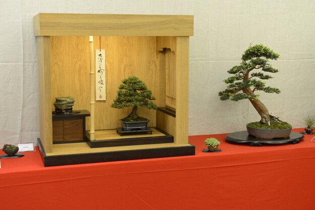 Výstava bonsajov v Botanickej záhrade UPJŠ.