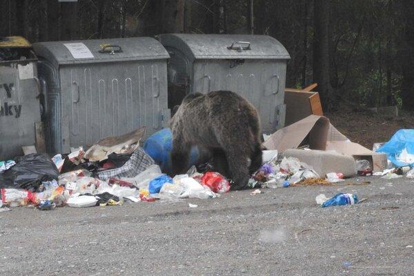 Medveď sa kŕmi odpadkami.
