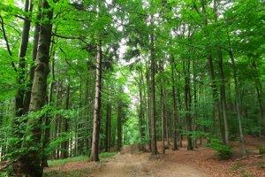 Les poskytoval ochranu pred dažďom i tieň pred Slnkom.