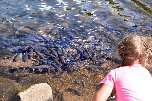 Priezračná voda umožňuje sledovať veľké množstvo rýb, ale rybárčenie je tam zakázané.