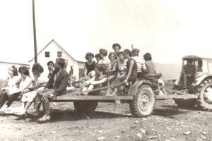 Odvoz pracovníkov JRD za prácou na pole. Takto vyzerala vnútropodniková doprava vroku 1972. Keď obecný rozhlas ráno vyhlásil miesto adruh práce, ľudia sa zhromaždili vskupinkách okolo hlavnej cesty atakzvaná ryba ťahaná traktorom ich na pracovisko odviezla.
