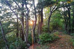 Vrchol Ľadonhory - západ slnka medzi konármi stromov.
