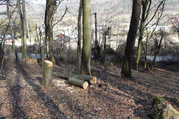 Ochranári nachádzajú v prírodnej rezervácii pravidelne vyrúbané stromy.