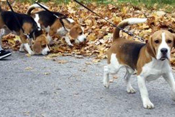 Nové mestské nariadenie sprísňuje podmienky pre chovateľov psov.