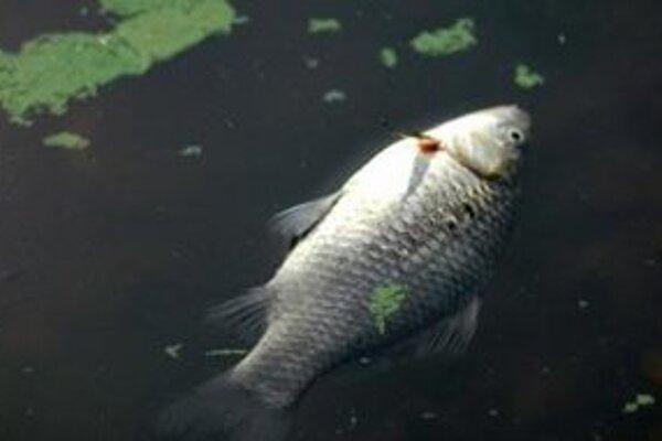 Úhyn rýb z 21. júna v Trnávke začal v katastri obce Boleráz.
