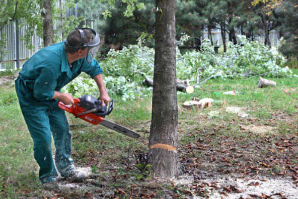 Do rozpočtu mesta sa za vyrúbané stromy dostalo viac ako dvanásťtisíc eur, čo je päťnásobný nárast oproti minulosti.
