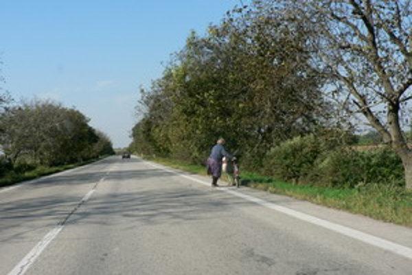 Babku zberačku sme pristihli medzi Trnavou a Piešťanmi, neďaleko odbočky na Žlkovce.