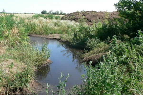 Pohľad na lagúnu plnú močovky v okolí nepovoleného hnojiska.