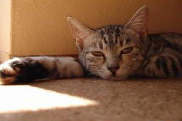 Za naj-kuriozitu roku 2008 označili hasiči záchranu mačky spod novinového stánku.