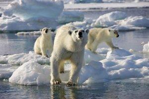 Biely medveď sa stal symbolom klimatických zmien. Otepľovaním je najviac ohrozený.