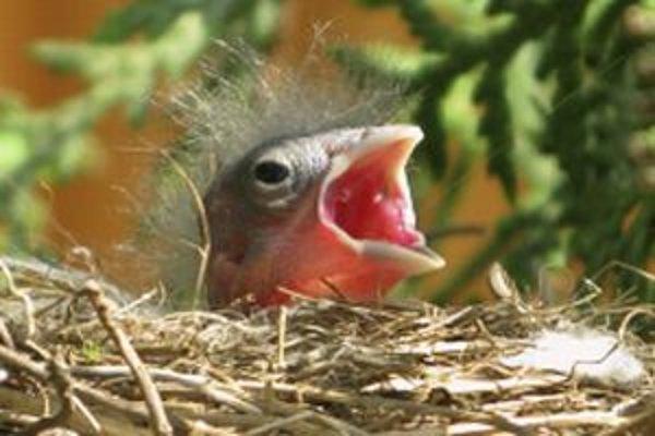 Vtáčiky nemôžeme prikrmovať v zime hocijakým jedlom