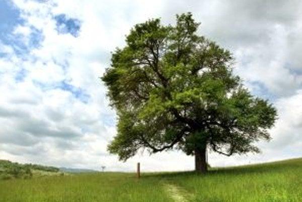 Ilustračné foto. Stromy majú šancu vyhrať odborné ošetrenie.