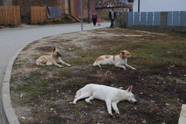 Psy. Tie z osady sa zatiaľ nechystajú za hranice Slovenska.