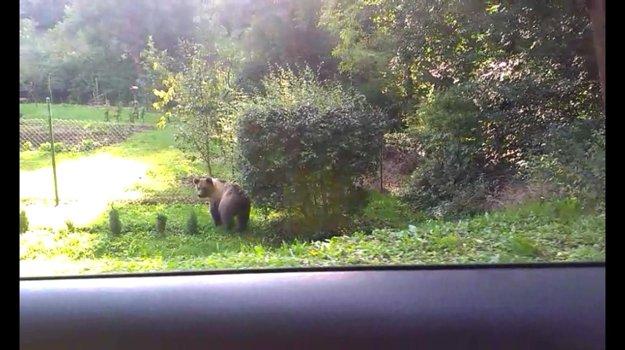 Ešte sa takto obzrel za autom a potom už bežal popri plote do lesa. Video mobilom urobil vodič Vratko Kubala.