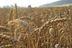 Aj kysuckí poľnohospodári čakajú na zlepšenie počasia.