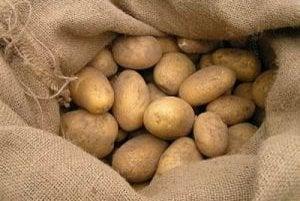 Poľnohospodárske podniky na Kysuciach už pestovať zemiaky nechcú.
