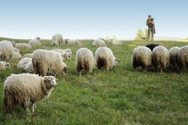 V Klokočove na Konečnej prežili zaujímavý ovčiarsky deň. V obci privítali putujúcich pastierov z Rumunska.