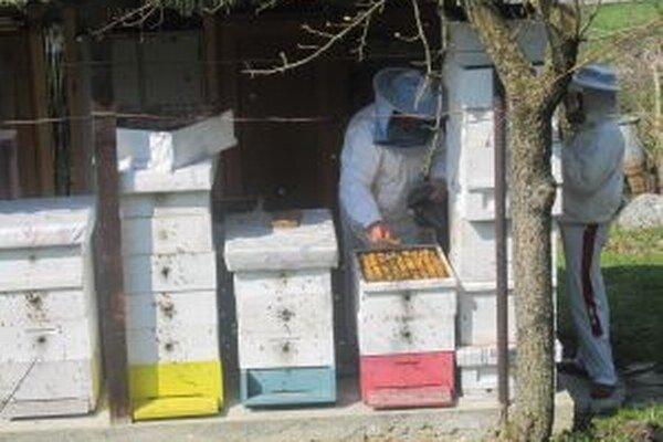 Kysuckí včelári namiesto stáčania kvetového medu museli včielky prikrmovať.
