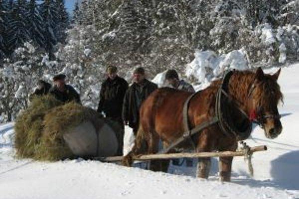 Už tradične pomáha poľovníkom zo Svrčinovca koník.