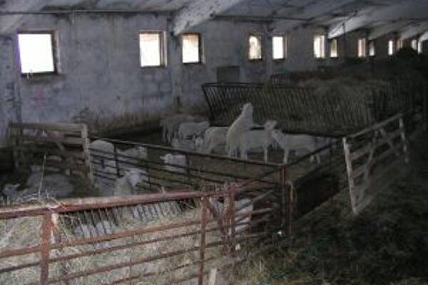 Aj barančekov zo Starej Bystrice čakala dlhá cesta do cudziny.