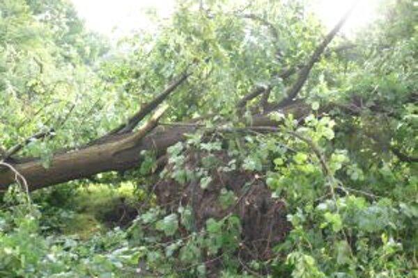 Čadčania neverili vlastným očiam. Stromy vytrhávalo aj s koreňmi.