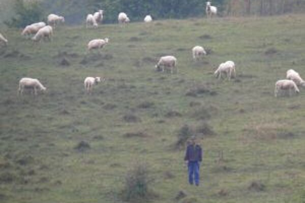 Chov oviec má na Kysuciach svoje tradície. Dnes sa mu však venujú už len väčšie poľnohospodárske podniky.