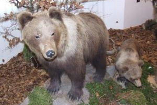 Výstava prezentuje rôzne druhy zvierat, ktoré žijú na Kysuciach.