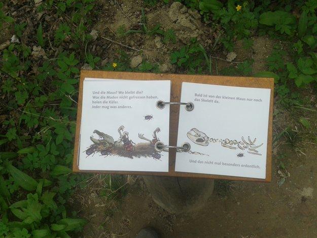 Cesta smrti vysvetľuje detským spôsobom ako sa príroda vysporiada s mŕtvymi telami zvierat.