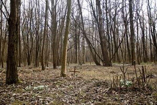 Nelegálny zvierací cintorín je v bratislavskej Petržalke. Medzi stromami nájdete kríže a hrobčeky z kameňov.
