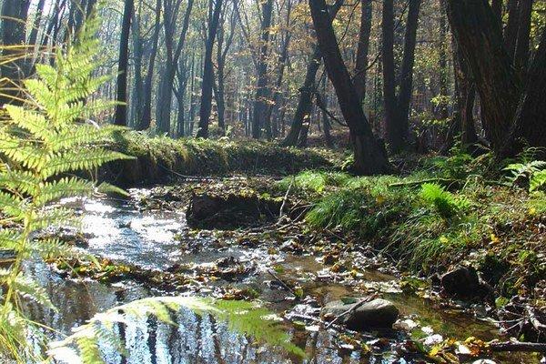 Aj takéto zákutia s prirodzenými meandrami môžte vidieť v okolí riečky Vydrica.