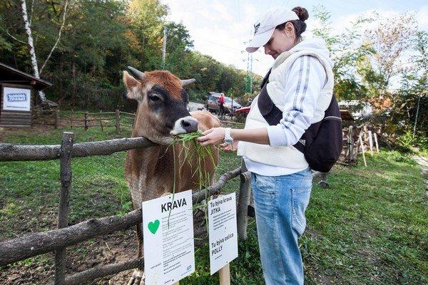 V útulku už môžete vidieť aj hospodárske zvieratá.