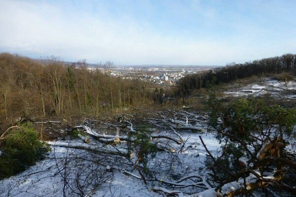 Vyrúbaná plocha na Kolibe prekvapila miestnych obyvateľov i mestskú časť.