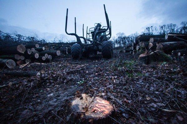 Drevo na nelegálne vyrúbanom pozemku môžu majitelia triediť a presúvať, nesmú ho však odvážať.