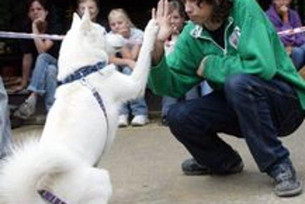 Majitelia vycičených psov môžu dostať zľavu.