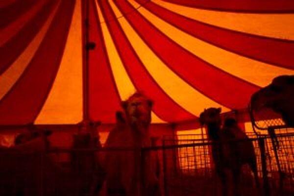 Aktivisti tvrdia, že zvieratá na cestách trpia. Majitelia cirkusov to odmietajú.