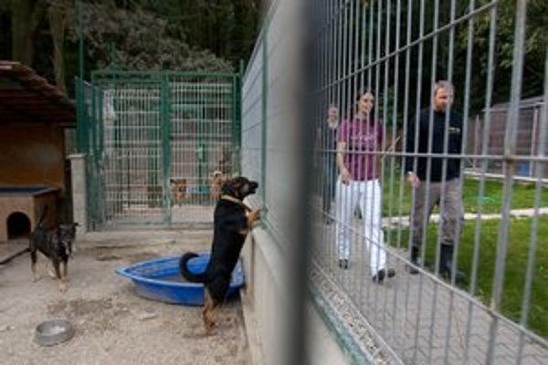 Dobrovoľnícke brigády sú v útulku Slobody zvierat každý mesiac.