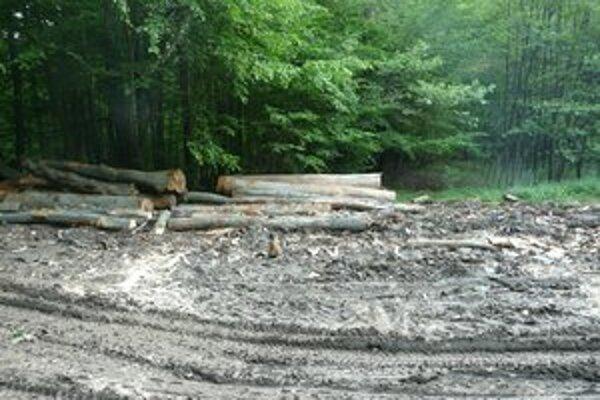 Výrub desiatok stromov už leží aj na polícii ako podnet na prešetrenie.