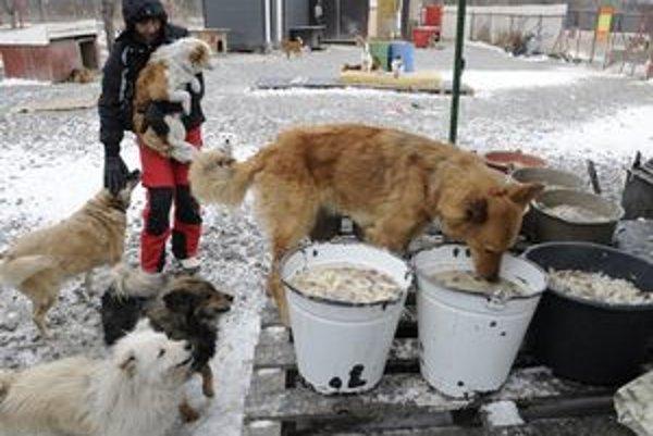 Na nezištnú pomoc dobrovoľníkov sú odkázané aj útulky pre opustené zvieratá.