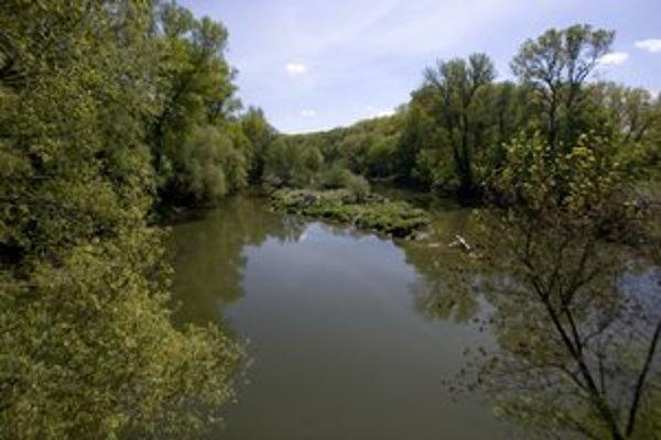 Vzácne zvyšky lužných lesov potrebujú svoju ochrannú zónu.