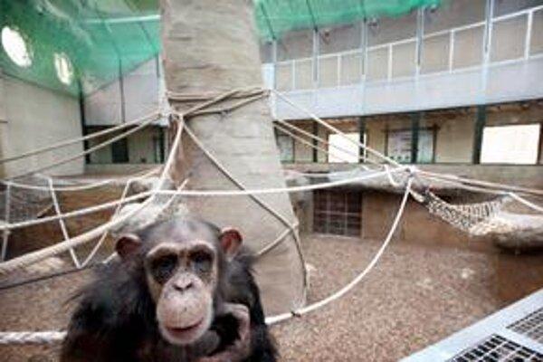 Pavilón primátov v ZOO.