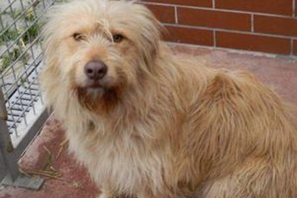 Aj tento trojročný psík čaká na nového majiteľa v útulku Slobody zvierat