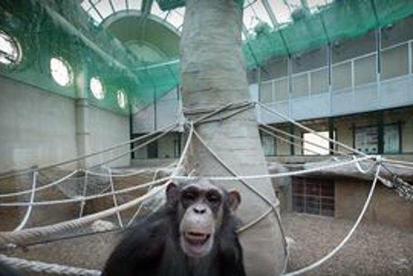 Sprevádzať budú pavilónom primátov.